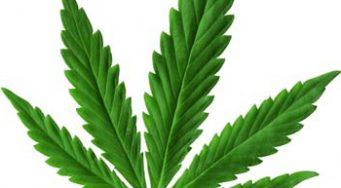 Medical Marijuana Presentation